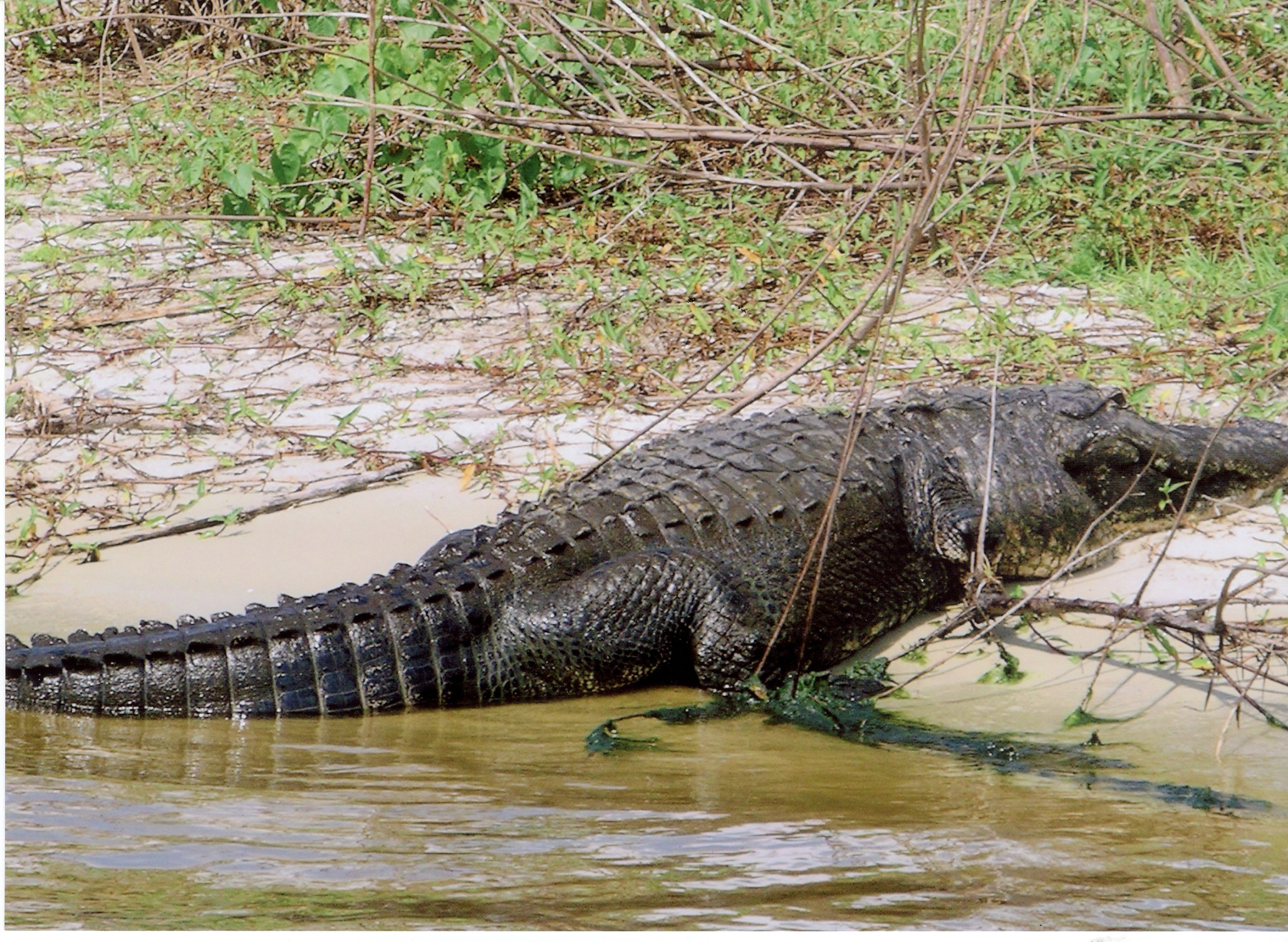 About the wildlife in lake okeechobee big o tours for Lake okeechobee fishing